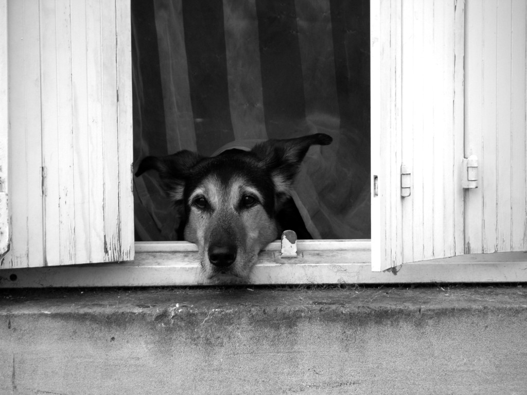 doggie bayeaux bw